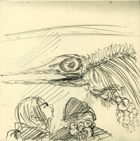 netter.naturalhistory.dinodolphin