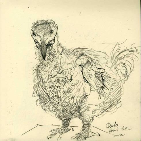 netter.naturalhistory.dodo
